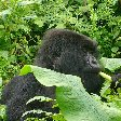 Rwanda Volcanoes National Park Ruhengeri Trip Vacation