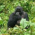 Rwanda Volcanoes National Park Ruhengeri Travel