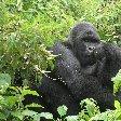 Rwanda Volcanoes National Park Ruhengeri Travel Review