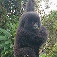 Rwanda Volcanoes National Park Ruhengeri Experience