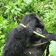 Rwanda Volcanoes National Park Ruhengeri Vacation Sharing