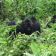 Rwanda Volcanoes National Park Ruhengeri Photo