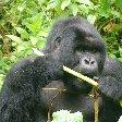 Rwanda Volcanoes National Park Ruhengeri Travel Blog