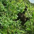 Rwanda Volcanoes National Park Ruhengeri Review