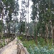 Rwanda Volcanoes National Park Ruhengeri Travel Album