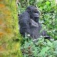 Rwanda Volcanoes National Park Ruhengeri Blog Photos