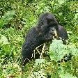 Rwanda Volcanoes National Park Ruhengeri Blog Photo
