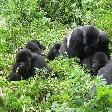 Rwanda Volcanoes National Park Ruhengeri Trip Picture