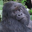 Rwanda Volcanoes National Park Ruhengeri Picture