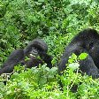 Rwanda Volcanoes National Park Ruhengeri Photograph