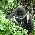 Rwanda Volcanoes National Park Ruhengeri Blog