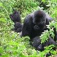 Rwanda Volcanoes National Park Ruhengeri Blog Sharing