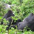 Rwanda Volcanoes National Park Ruhengeri Diary Photo