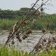 Rusizi National Park Bujumbura Burundi Album Pictures Rusizi National Park