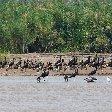 Rusizi National Park Bujumbura Burundi Vacation Tips Rusizi National Park