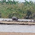 Rusizi National Park Bujumbura Burundi Vacation Information