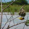 Rusizi National Park Bujumbura Burundi Travel Photo