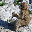 Rock of Gibraltar monkeys Trip Adventure