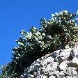 Rock of Gibraltar monkeys Travel Experience