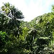 Saint Lucia island pictures Castries Travel Gallery