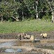 Dzangha-Sangha National Park and Boali Bangui Central African Republic Photograph