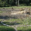 Dzangha-Sangha National Park and Boali Bangui Central African Republic Diary Photo