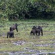 Pictures of Odzala National Park Ewo Republic of the Congo Story Sharing Pictures of Odzala National Park