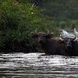 Pictures of Odzala National Park Ewo Republic of the Congo Blog Information