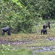 Pictures of Odzala National Park Ewo Republic of the Congo Vacation Information