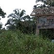 Pictures of Odzala National Park Ewo Republic of the Congo Review Sharing
