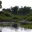 Pictures of Odzala National Park Ewo Republic of the Congo Review Gallery