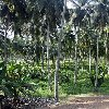 The capitals of Cote d'Ivoire Abidjan Trip