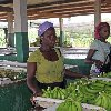 The capitals of Cote d'Ivoire Abidjan Holiday Photos