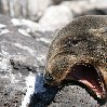 Galapagos Islands Ecuador Trip Review Galapagos Islands boat ride