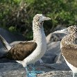 Galapagos Islands Ecuador Review Galapagos Islands boat ride