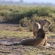 Kenya safari packages Amboseli Travel Sharing