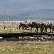 Kenya safari packages Amboseli Picture