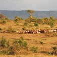 Kenya safari packages Amboseli Blog Sharing