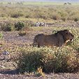 Kenya safari packages Amboseli Review Photo