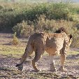 Kenya safari packages Amboseli Trip Sharing