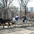 New York Travel Guide United States Diary Adventure