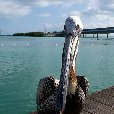 Romantic getaway in Florida Florida Keys United States Review Gallery