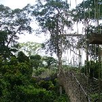 Kakum National Park Cape Coast Ghana Picture Sharing Kakum National Park