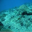 Fiji diving resorts Nadi Album Pictures