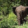 Balloon safari Serengeti Karatu Tanzania Diary Experience