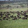 Balloon safari Serengeti Karatu Tanzania Trip