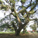 The capital of Suriname Paramaribo Trip Guide The capital of Suriname
