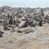 Cape Cross seal reserve Namibia Photo Sharing Cape Cross seal reserve