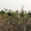 Benin Wildlife Safari Tour Tanguieta Holiday Pictures Pendjari National Park