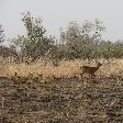 Pendjari National Park Tanguieta Benin Diary Information